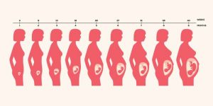 How Long Normal Pregnancy Lasts